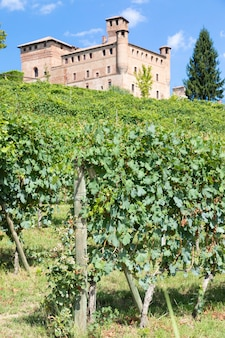 グリンザーネカヴール城を背景にした、イタリアのピエモンテ地方のブドウ園。ランゲはバローロワインのワイン地区です。