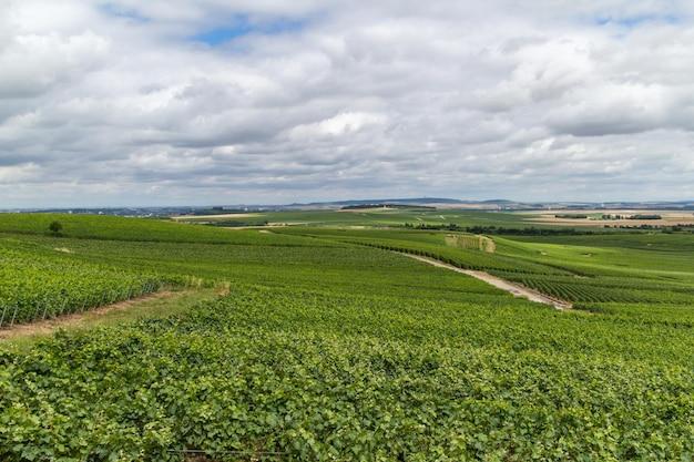 フランス、モンターニュ・ド・ランスのブドウ園の風景