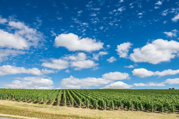 青い空と雲の下のブドウ園の風景、モンターニュ・ド・ランス、フランス