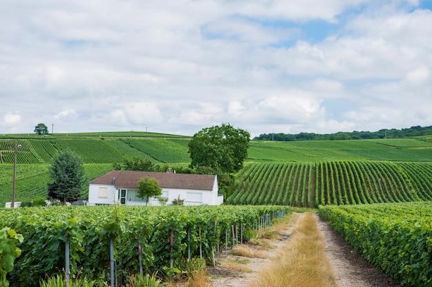 家のあるブドウ園の風景、モンターニュ・ド・ランス、フランス