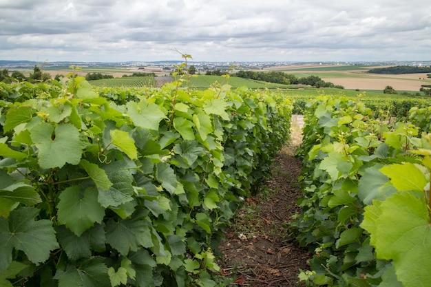 地平線上に家のあるブドウ園の風景、モンターニュ・ド・ランス、フランス