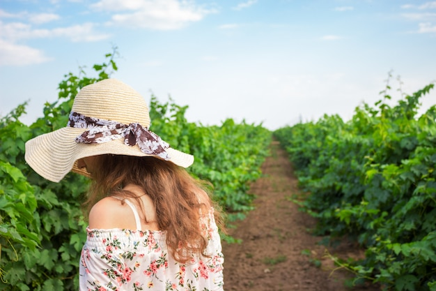 Vineyard winery tourist woman grape picking. harvest farming to make white wine
