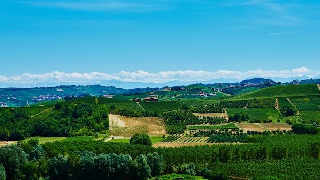 イタリアのピエモンテ州の丘の上のブドウ園。