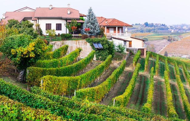 Vineyards of piedmont and small villages, northen italy
