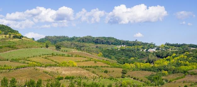ブラジルのブドウ園の谷