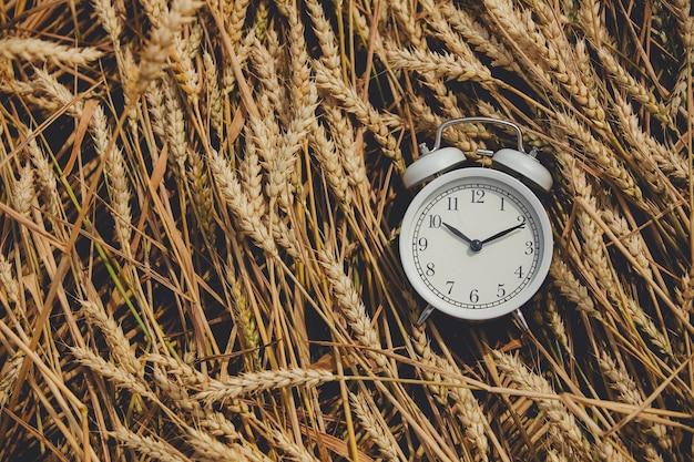 Vintage alarm clock on wheat field