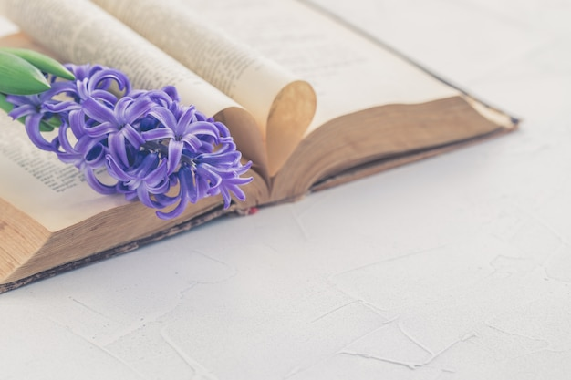 Vintage antique book and hyacinth on light background, selective focus