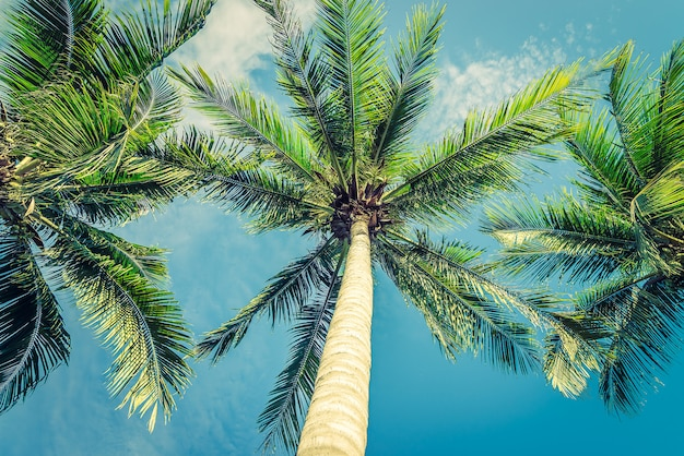 Vintage beautiful tropical palm tree - vintage filter