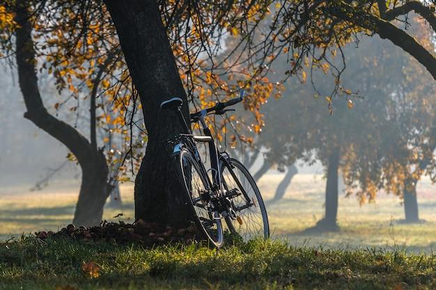 Винтажный велосипед припаркован под яблоней туманным осенним утром.