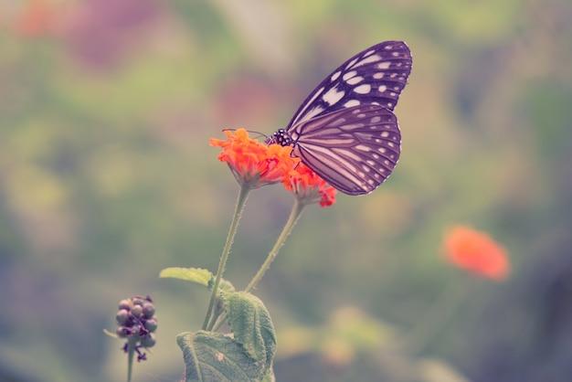 ヴィンテージバタフライとオレンジ色の春の花。ヴィンテージレトロエフェクトスタイルの写真。
