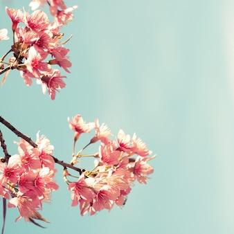 Винтажная расцветка - цветок сакуры. фон природы (цвет эффекта ретро-фильтра)