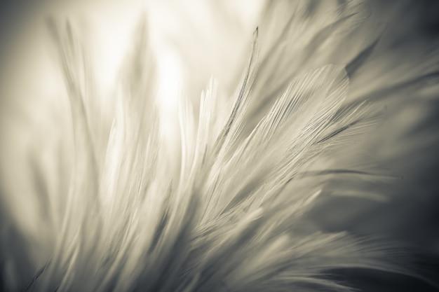 柔らかく、ぼかしスタイルの背景にヴィンテージの鶏の羽