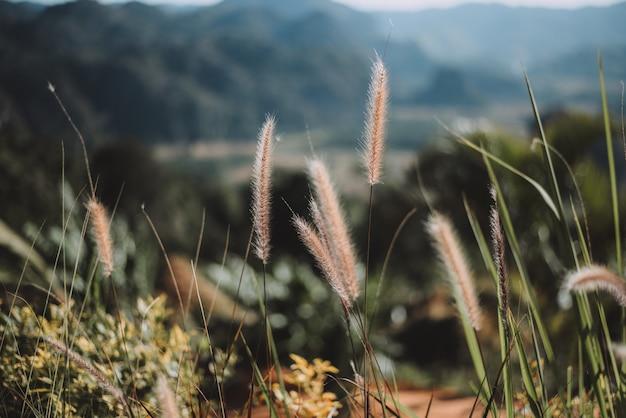 Винтажные цветные цветы травы