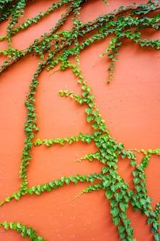 빈티지 콘크리트 붉은 벽 기는