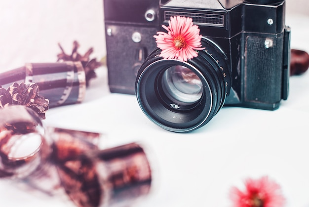 Vintage film camera, pink flowers and film on white background