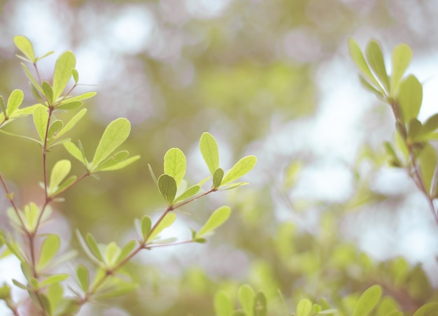Vintage filter: green leaves with blur bokeh background