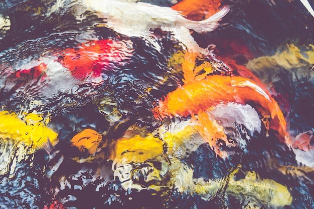Винтажный фильтр: рыба koi в пруду, красочный естественный фон, выцветший цвет
