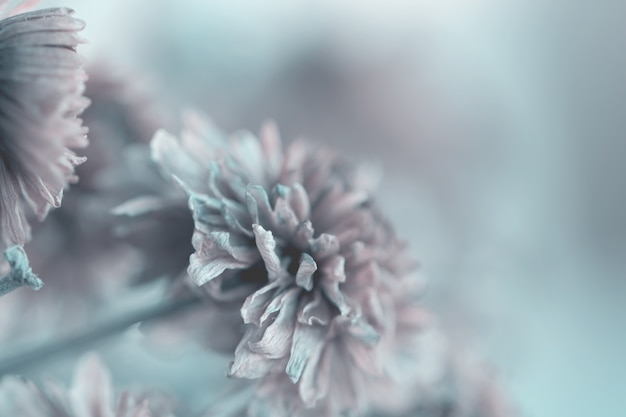 Vintage flowers made with gradient for background