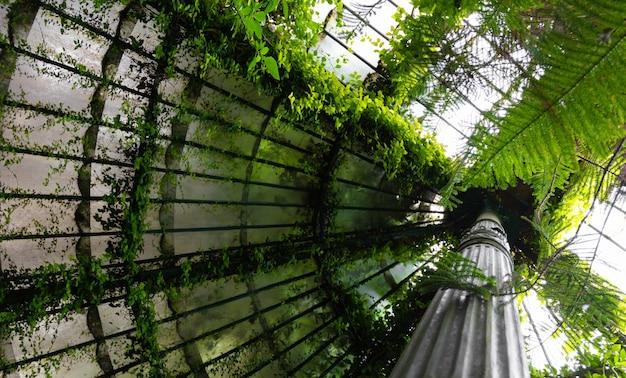 Старинный стеклянный купол, покрытый зелеными вьющимися растениями.