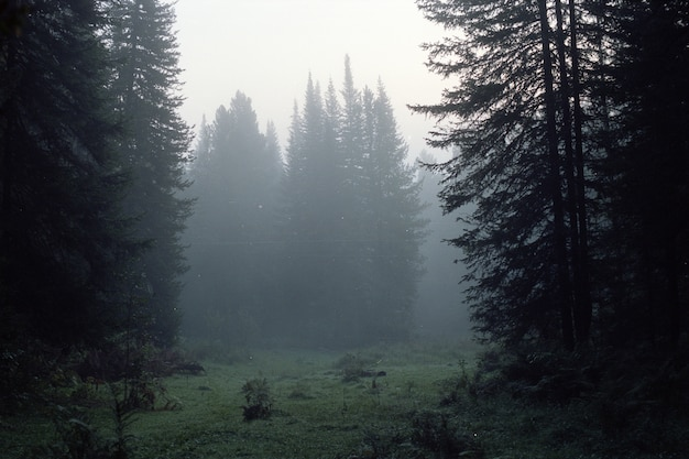 Vintage landscape in dark taiga with coniferous trees