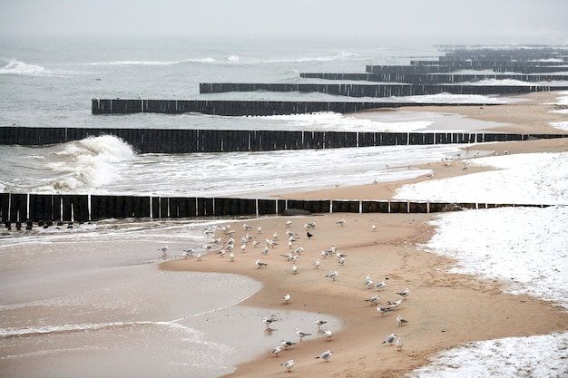 Vintage long wooden breakwaters stretching far out to sea, winter baltic sea landscape