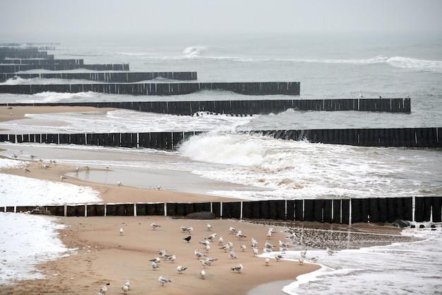 Старинные длинные деревянные волнорезы, уходящие далеко в море, зимний пейзаж балтийского моря. чайки на песчаном пляже. тишина, уединение, спокойствие и покой.