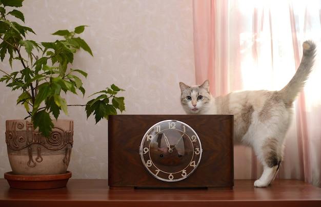 Старинные старинные часы в деревянном футляре со стеклянной крышкой, стоящие на деревянной поверхности рядом с горшком с горшечным цветком и забавным котом