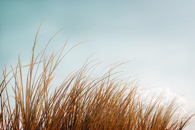 Винтажная фотография абстрактного фона природы с полевыми цветами и растениями