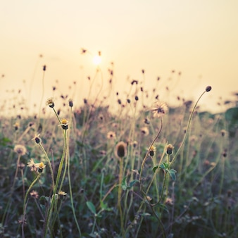 Vintage photo of nature background with wild flowers and plants in sunset