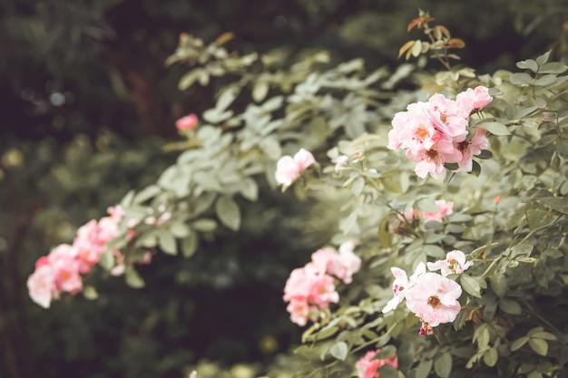 Vintage pink rose flower tree