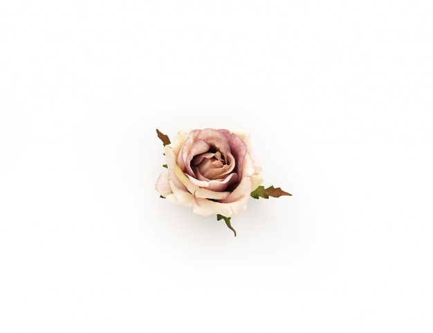 Vintage rose on isolated
