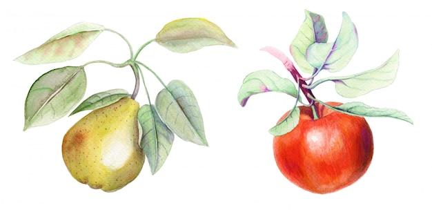 ヴィンテージ白背景に梨とリンゴの枝水彩イラスト入り