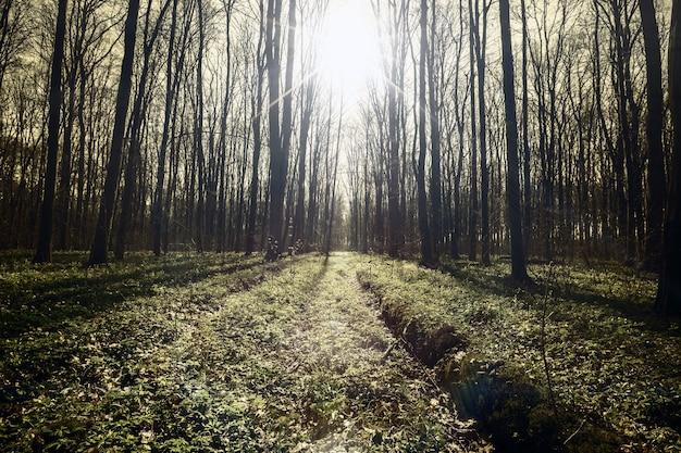 빈티지 봄 숲 나무. 자연 녹색 나무 햇빛. 하늘