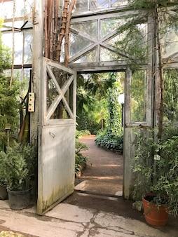 ガラス天井の下の緑豊かな植物が付いている温室のヴィンテージ鋼とガラスの戸口。常緑植物、日光のある古い熱帯温室の眺め
