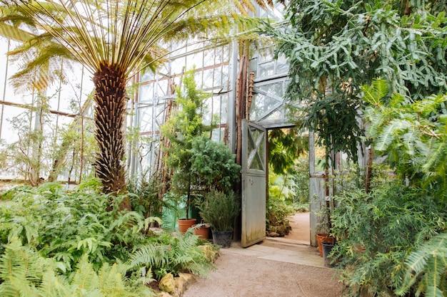 ガラス天井の下の緑豊かな植物が付いている温室のヴィンテージ鋼とガラス戸口