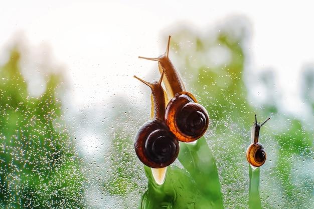 물에 줄을 서 걷는 달팽이 가족의 빈티지 스타일 사진