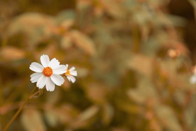 ヴィンテージスタイルの夏の花の背景