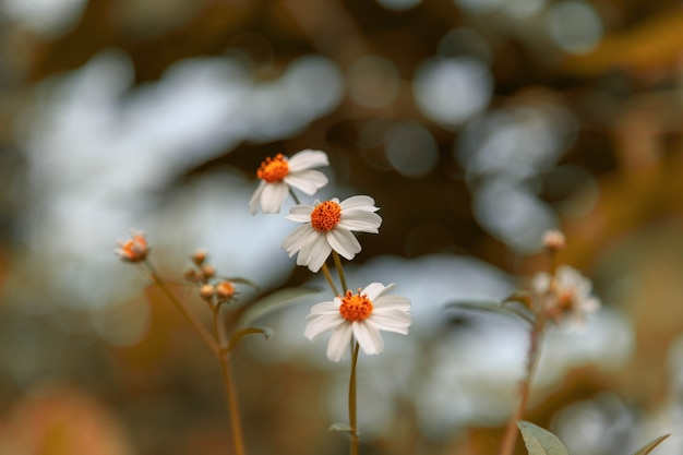 ヴィンテージスタイルの夏の花