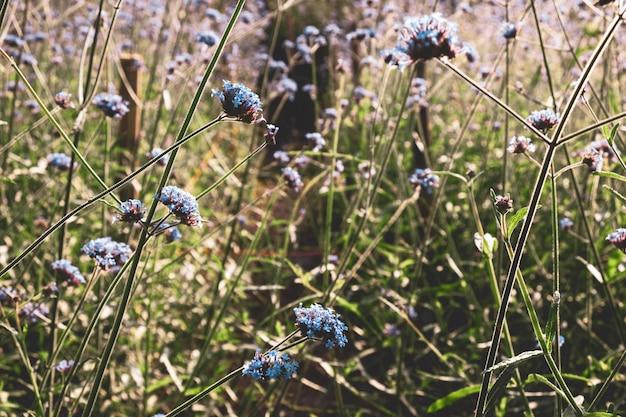 ビンテージバーベナの花の背景