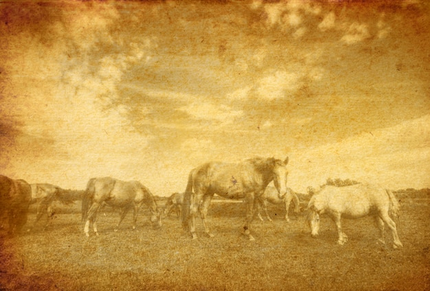 Vintage view of horses in the meadow