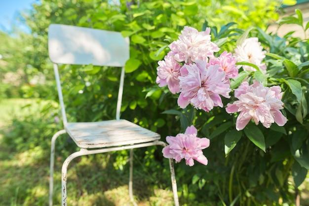 ピンクの牡丹の茂み、リラクゼーション、アロマテラピー、趣味の近くの庭のヴィンテージの白い椅子