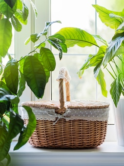 Vintage wicker basket on window sill with green plants