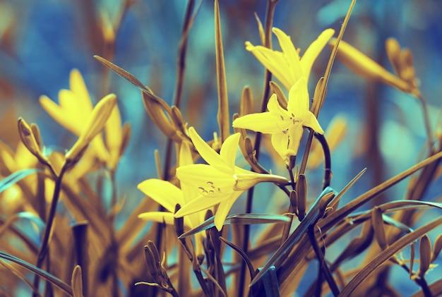 빈티지 야생 백합 꽃