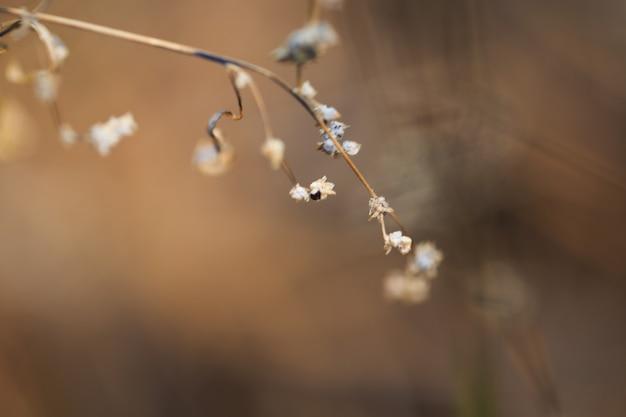 아침에 봄이나 가을 들판에 있는 빈티지 야생 초원 식물은 자연적인 노란색 오렌지색 햇살 가득한 배경입니다. 야외 신선한 사진 근접 촬영, 흐린 가을 자연 배경, 얕은 피사계 심도