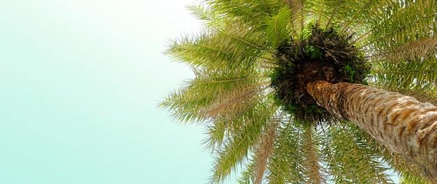 Винный стиль пальмы на ясном красивом летнем небе тропическом