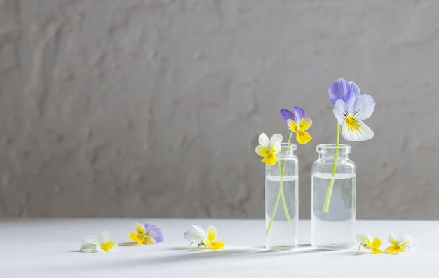 Viola flowers in glass jars on white background