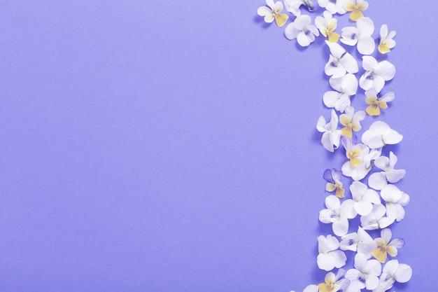 컬러 용지에 비올라 꽃