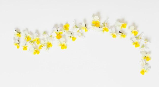白い背景の上のビオラの花