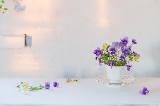 Viola flowers in white cup on white background