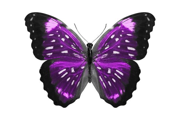 Фиолетовая бабочка. естественное насекомое. изолированные на белом фоне